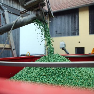 Sojabohnen für die Aussaat werden geladen