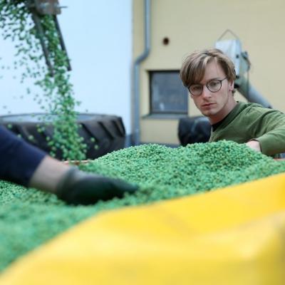 Valentin Seiringer, Bio-Landwirt im niederösterreichischen Mostviertel prüft die Sojabohnen vor der Aussaat